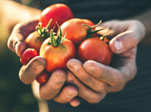 Putse tomaten De Maeyer